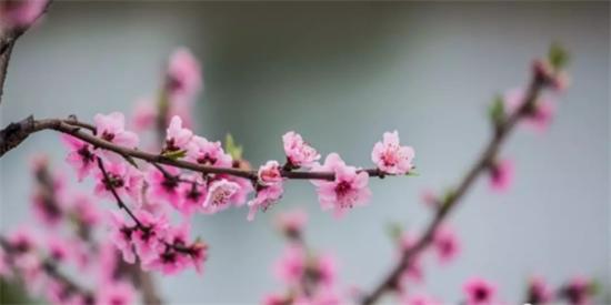 春暖花开 东坡广济桃花等你来